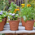 Beckley Primary School Plant pots - CP Ceramics